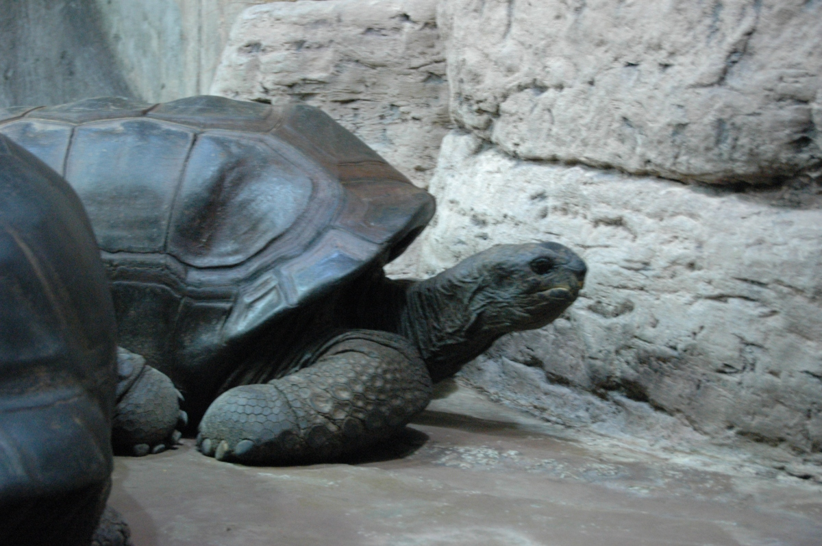 Tortoise at the Sedgwick County Zoo