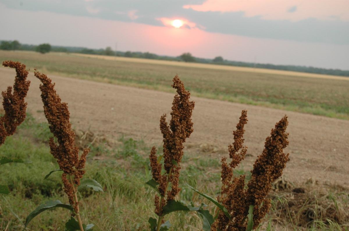 Stray milo at sunset