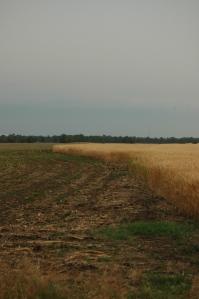 Soybeans vs. Wheat