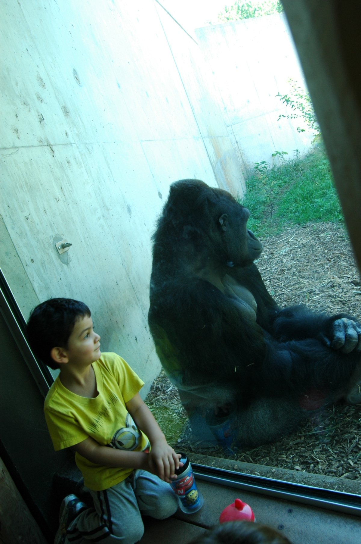 Imitating the gorilla behind the glass