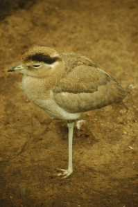 Bird standing on one leg