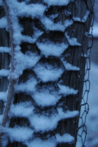 Snow in the chicken wire