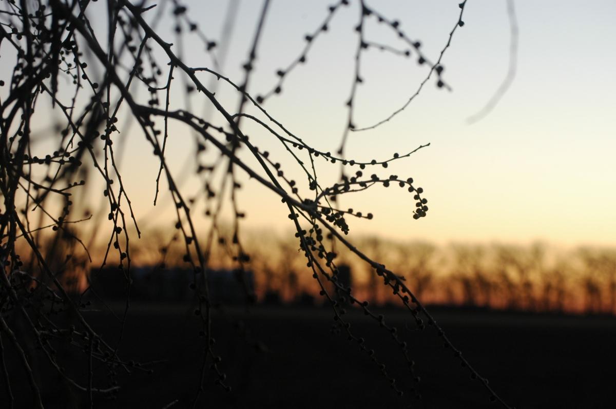 Sunrise in the trees - Safe Haven Farm, Haven, KS