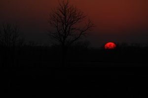 Setting sun at Safe Haven Farm - Haven, KS