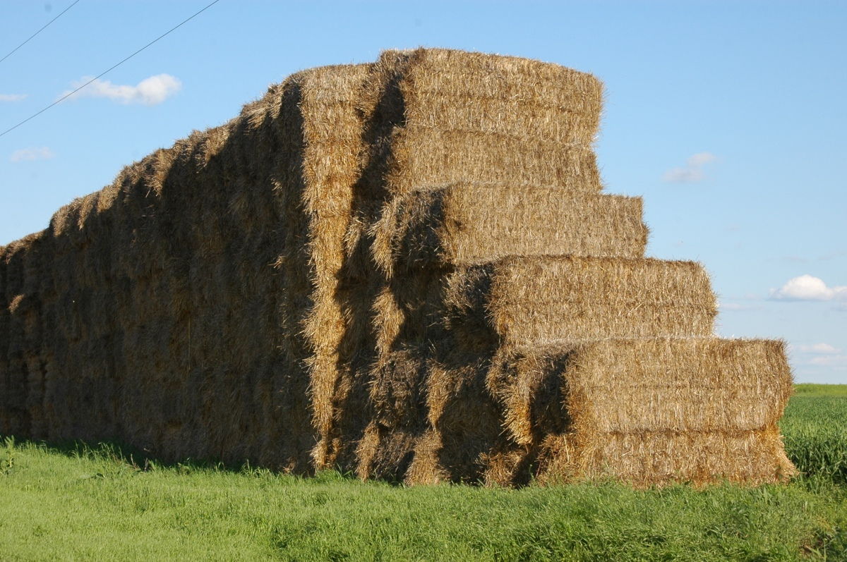 Hay bales - Safe Haven Farm, Haven, KS