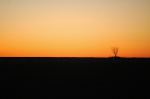 Single tree at sunrise - Safe Haven Farm, Haven, KS