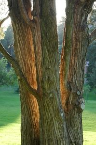 Sunrise behind a tree - Glen Eyrie, Colorado Springs, CO