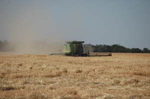 Wheat harvest at Safe Haven Farm - Haven, KS