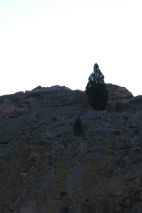 Tree on a mountain at Glen Eyrie - Colorado Springs, CO