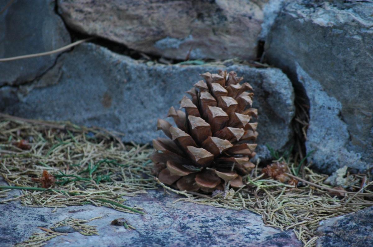 Pine cone on stone steps - Glen Eyrie, Colorado Springs, CO