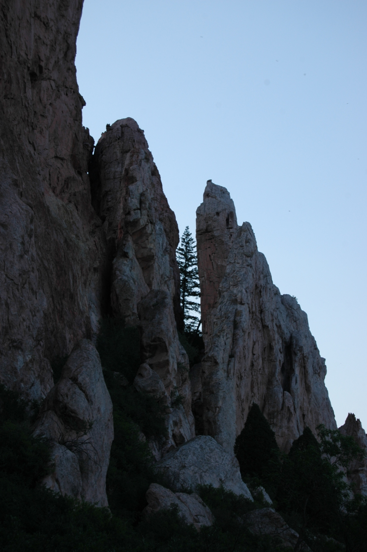 Tree growing between two mountains - Glen Eyrie, Colorado Springs, CO