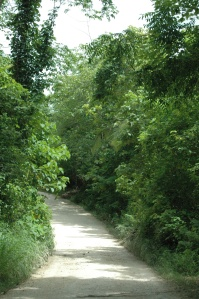 Dirt road through the jungle - Peten, Guatemala