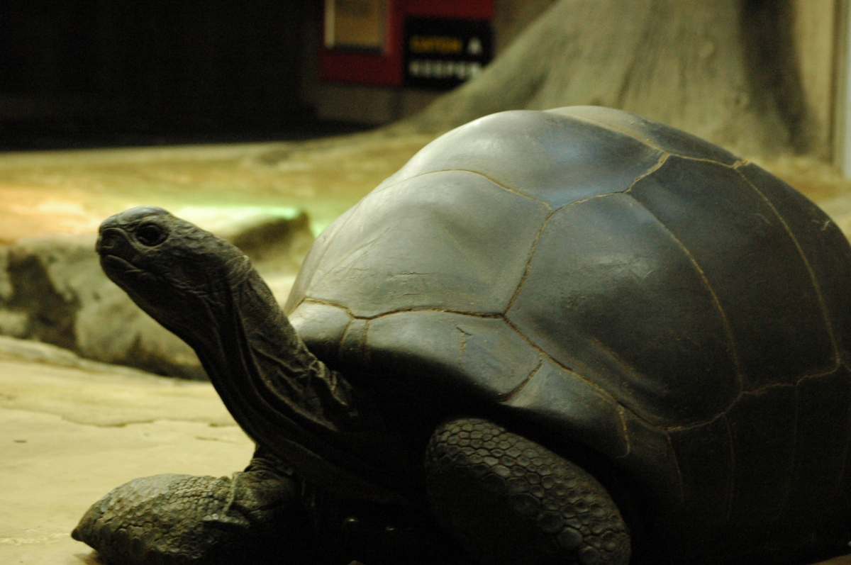 Giant tortoise at the Sedgwick County Zoo - Wichita, KS