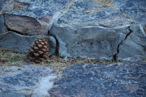 Pine cone on a step at Glen Eyrie - Colorado Springs, CO