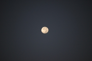 Full moon at Safe Haven Farm - Haven, KS