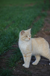 Cat in a field at Safe Haven Farm - Haven, KS