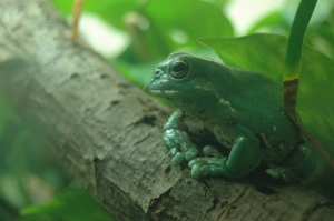 Frog on a log at the Sedgwick County Zoo - Wichita, KS