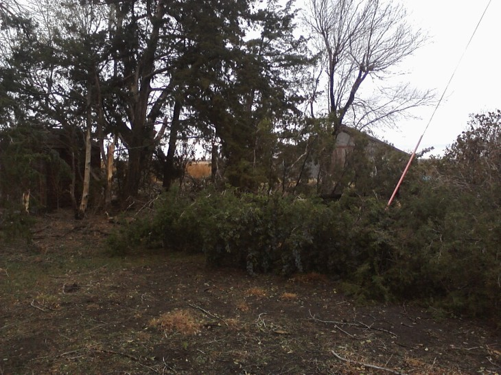 Downed cedar trees at Safe Haven Farm - Haven, KS