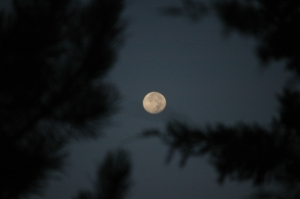 Moon in the pine trees at Safe Haven Farm, Haven, KS
