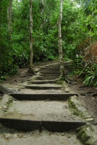 Steps in the jungle at Tikal, Peten, Guatemala