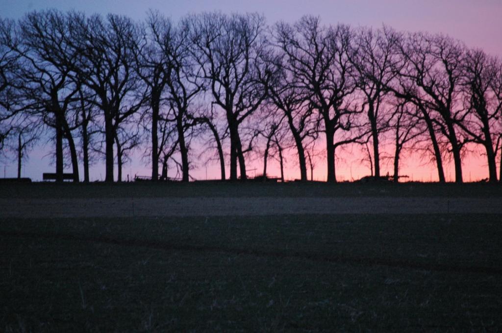 Sunrise behind the hedgerow at Safe Haven Farm, Haven, KS
