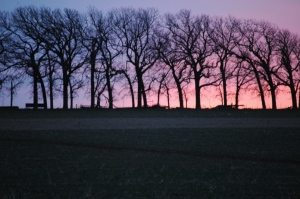 Sunrise behind the hedgerow at Safe Haven Farm, Haven, KS