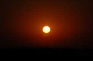 Sun rising over milo at Safe Haven Farm, Haven, KS