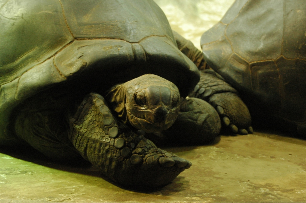 Tortoise at the Sedgwick County Zoo, Wichita, KS