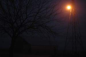 Mulberry tree and yard light on a foggy morning at Safe Haven Farm, Haven, KS