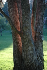 Sunrise behind a tree at Glen Eyrie, Colorado Springs, CO