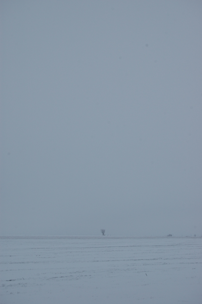 Distant, lonely tree in the snow at Safe Haven Farm, Haven, KS
