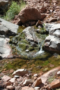 Mountain stream at Glen Eyrie, Colorado Springs, CO