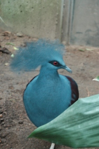 Big blue bird at the Sedgwick County Zoo, Wichita, KS
