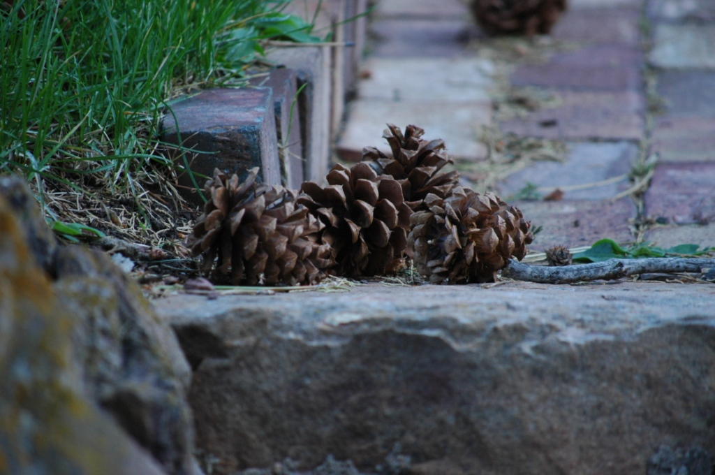 Pile of pine cones at Glen Eyrie, Colorado Springs, CO