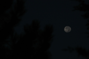 Moon in the pines at Safe Haven Farm, Haven, KS