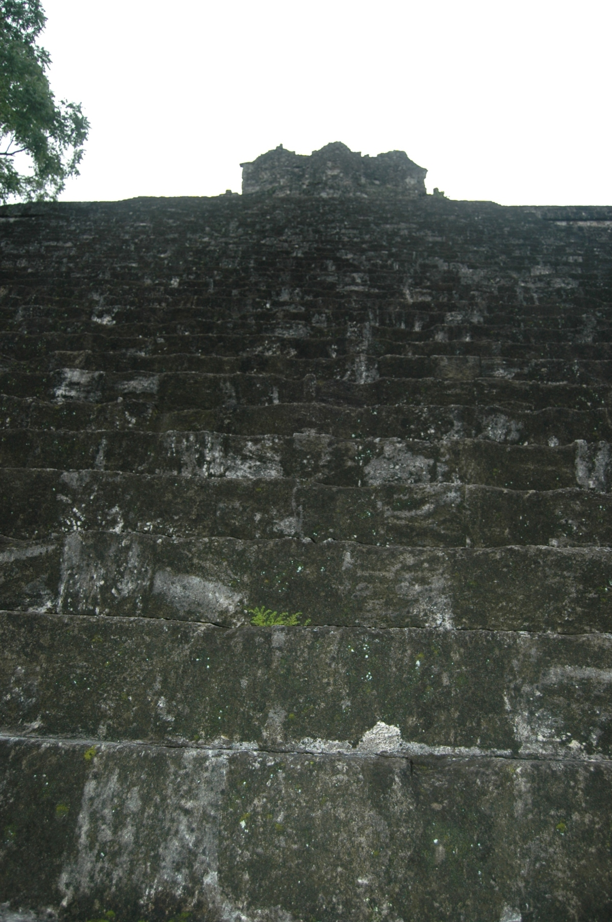 Steps of a temple in the Mayan Ruins of Tikal, Peten, Guatemala