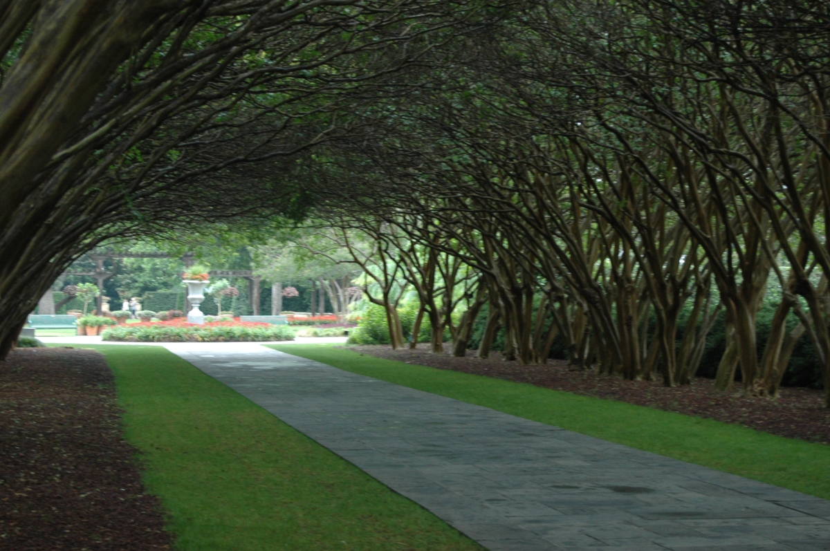 Tree-lined path at the Dallas Arboretum, Dallas, TX