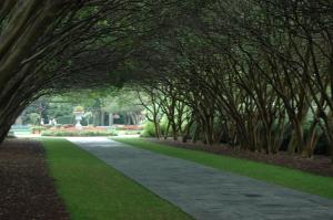Tree-lined path at the Dallas Arboretum, Dallas, TX