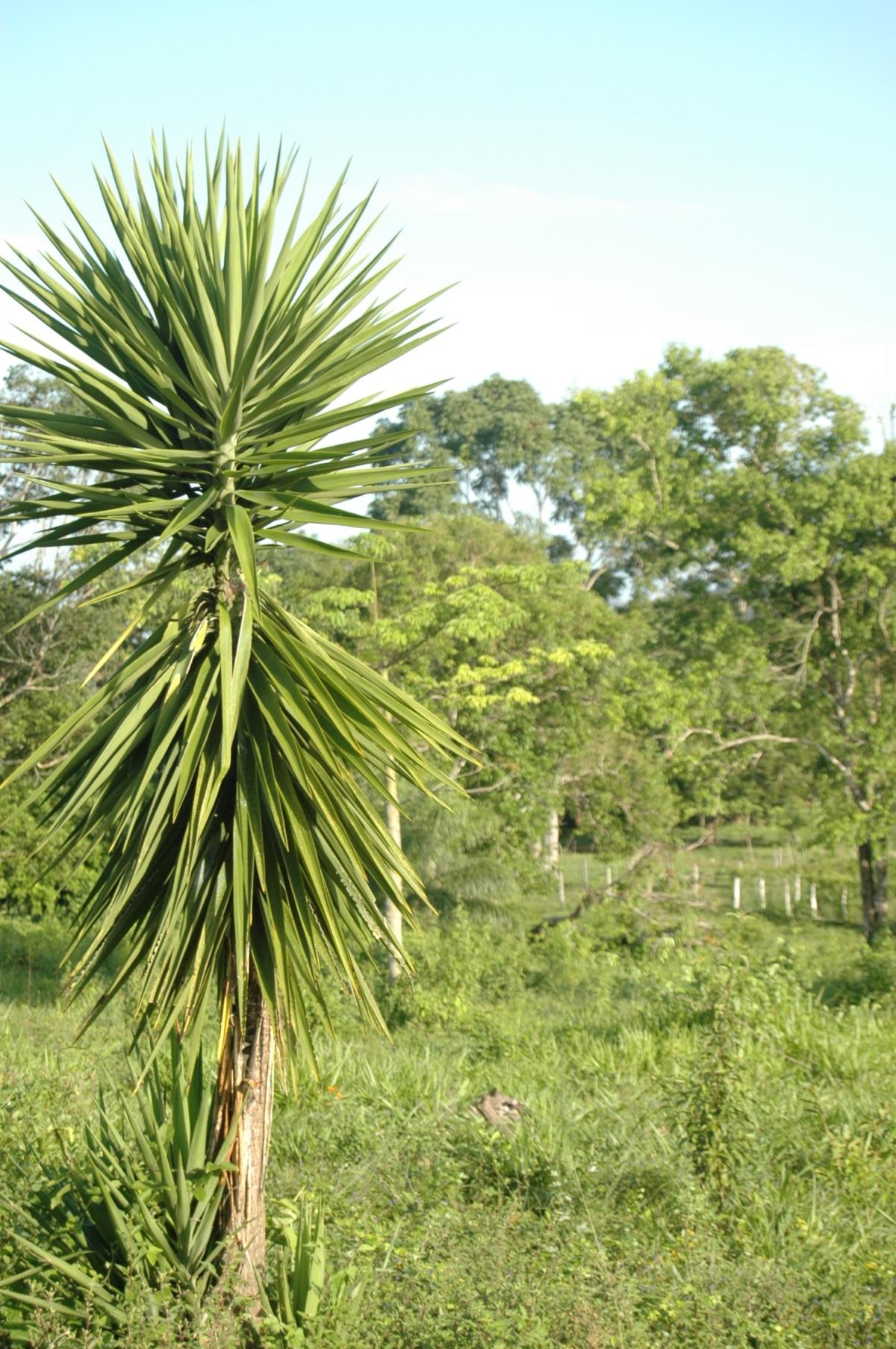 Green landscape in Guatemala