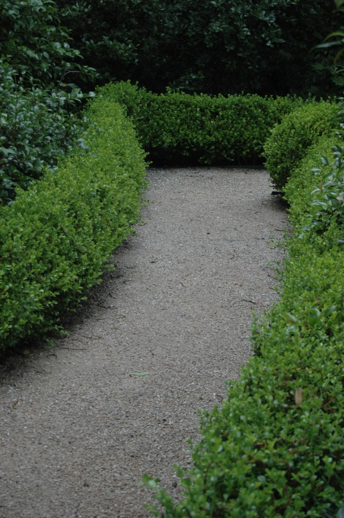 Bend in the path of a topiary maze at the Dallas Arboretum, Dallas, TX