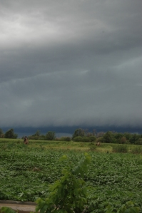 Storm clouds over the fields at Safe Haven Farm, Haven, KS