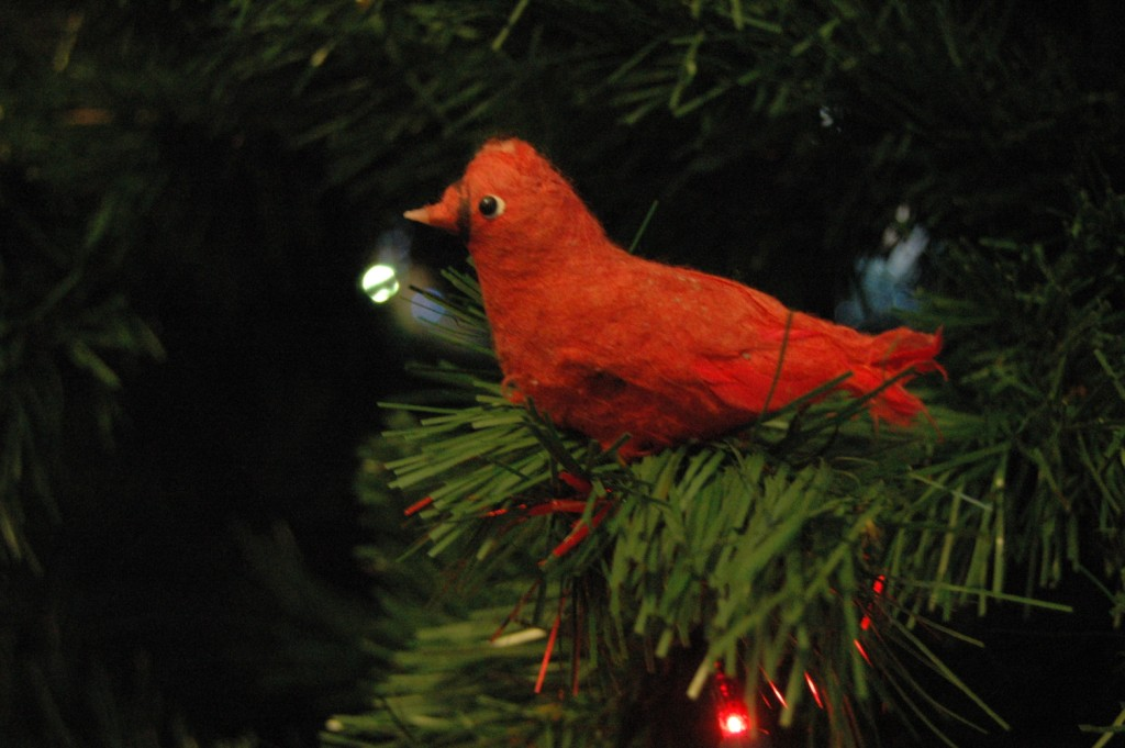 Ratty old cardinal ornament on my old tree at Safe Haven Farm, Haven, KS