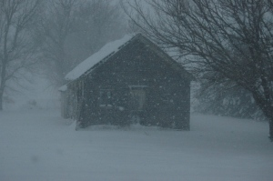 The old schoolhouse in the blowing snow at Safe Haven Farm, Haven, KS