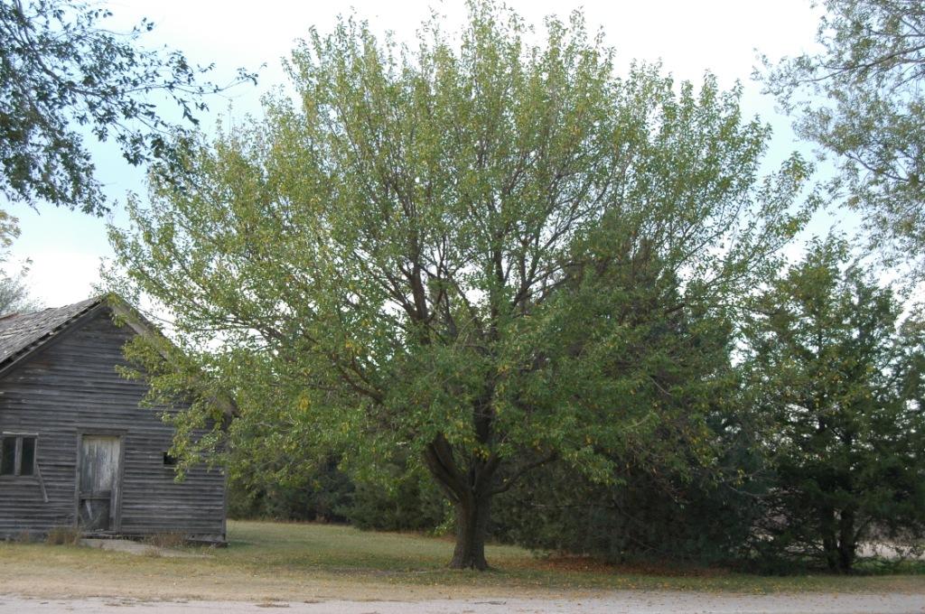 The dread mulberry bumper smasher at Safe Haven Farm, Haven, KS
