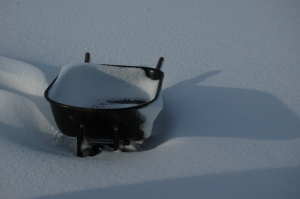 Wheelbarrow full of snow at Safe Haven Farm, Haven, KS