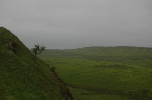 Sheep grazing in the distance along Hadrian's Wall, Northern England