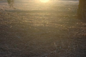 Spider webs in the sunlight at Safe Haven Farm, Haven, KS