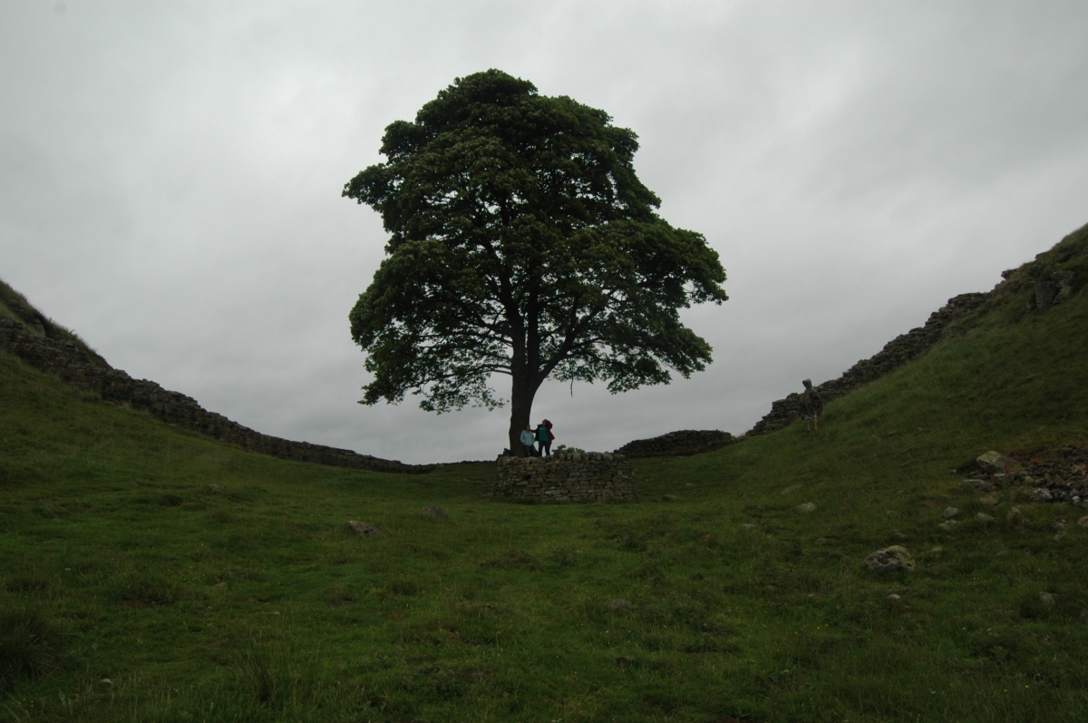 Sycamore Gap at Steel Rigg, Hadrian's Wall, Northern England