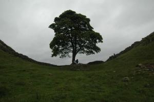 Sycamore Gap at Steel Rigg, Hadrian's Wall, Northern England