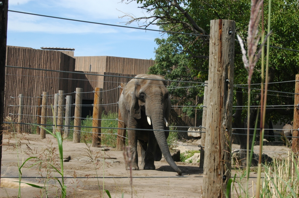 An elephant at the Sedgwick County Zoo, Wichita, KS
